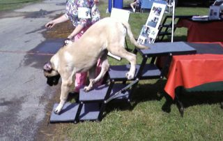 Mastiff descending from Grooming Table on Pet Loader®