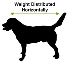 Dog Weight Distributed Horizontally
