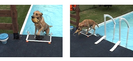 Pet Loader Pool Use